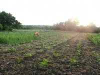Наша еда на поле