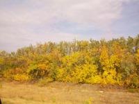 Осень РОДОСЛАВНОГО