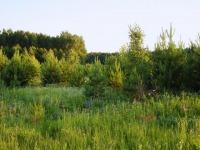 Поля и рощи между полями